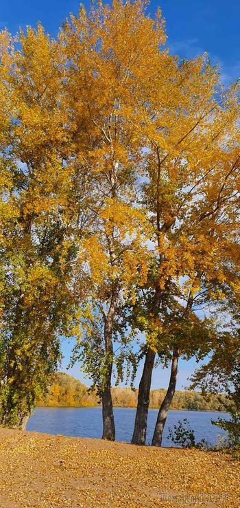 Щедрая осень (Стих)