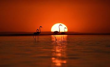Танцы фламинго: фоторепортаж