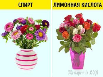 Странные и эффективные способы оживить цветы, о которых знают только флористы