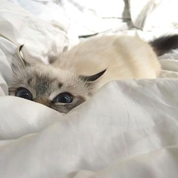 20 маленьких котят, которые вот-вот ринутся в атаку и она, скорее всего, не будет слишком коварной