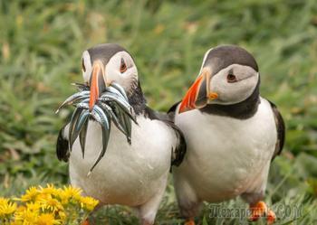 Лучшие работы с международного конкурса комедийной фотографии дикой природы 2020