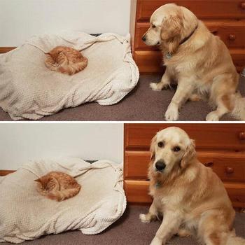 20 раз, когда наглые кошки выгнали собак с их мест и пёсики остались в полном недоумении