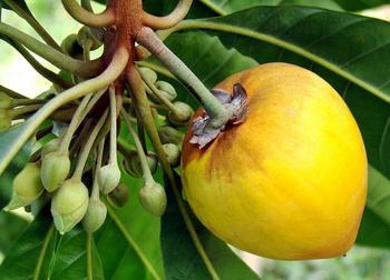 Самый калорийный фрукт — ТОП-5