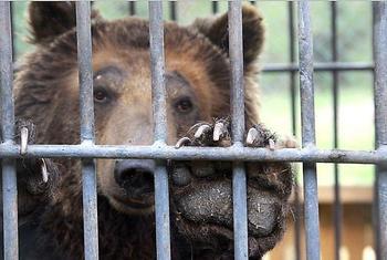 За что медведица Катерина отбывает пожизненное в казахстанской колонии