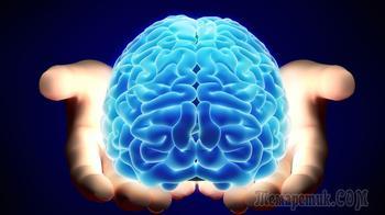 Восемь особенностей нашего мозга, до сих пор не разгаданных учёными
