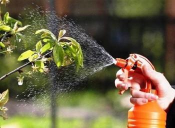 Как можно использовать ботву томатов с пользой для сада и огорода