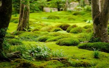 Устойчивые к вытаптыванию мхи и травянистые многолетники