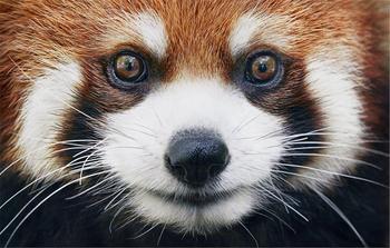 Животные, которые могут исчезнуть с нашей планеты