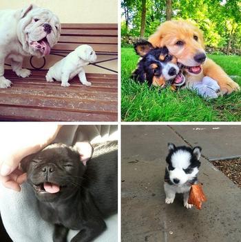 Маленькие щенки – это воплощение добра и света на нашей планете