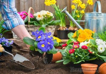 Клумба без усилий, или 12 неприхотливых растений для «ленивых» садоводов