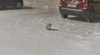 На улице сидела испуганная кошка, которую выгнали из дома