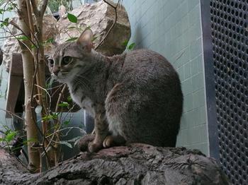 Мимимишные кошки, которые даже в почтенном возрасте выглядят, как милые котята