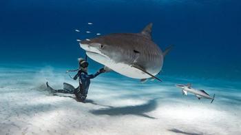 Красавица и чудовища: как смелая модель с Гавайев спасает белых акул