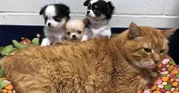 Кот, который стал сотрудником ветеринарной клиники