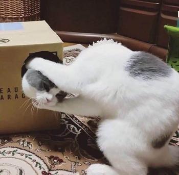 Котики – мастера иллюзий и визуальных фокусов