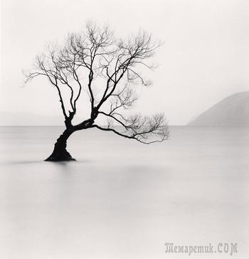 Волшебные деревья Майкла Кенны