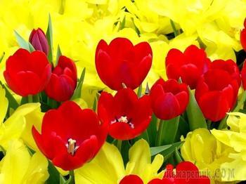 Красивые  цветы тюльпаны! Красивая музыка!