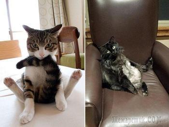 Уморительные фотографии котов, пойманных во время вылизывания своих причиндалов