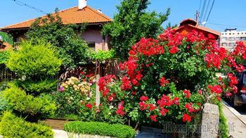 Райский сад в городе
