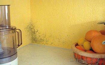 Где «обожает» селиться плесень, или Как сделать дом свободным от грибов-захватчиков