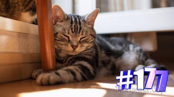 Смешные коты | Приколы с котами | Видео про котов | Котомания # 177