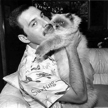Знаменитости и их коты