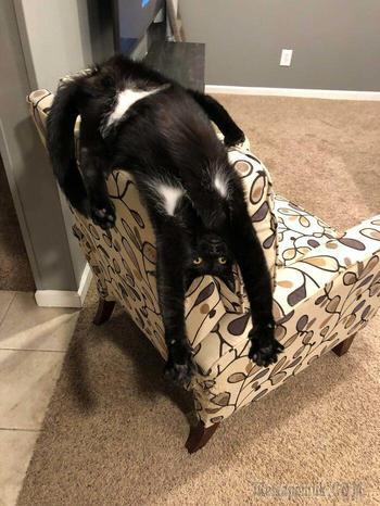 20 смешных «сломанных» кошек, которые отказываются вести себя как нормальные животные