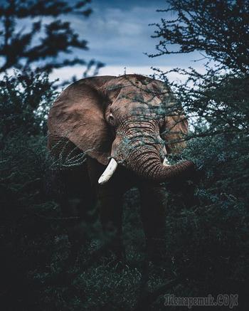 Когда дикая природа вызывает восторг. Фотограф Донал Бойд