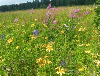 Летний поход по лесам Приобских полей Алтая