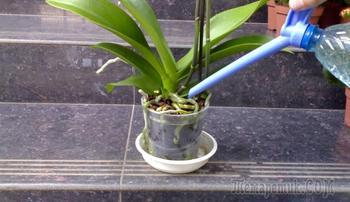 Методы полива орхидеи