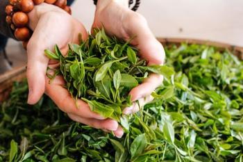 Что можно сделать с зеленым чаем?