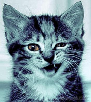 Имя, имя твоё, котёнок!?