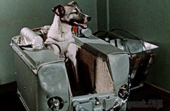 Интересные факты о Лайке, первой собаке в космосе