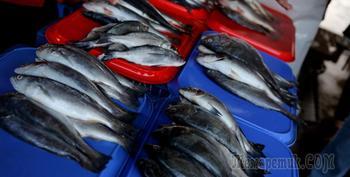 Беларусь увеличила поставки рыбы в Россию в 15 раз