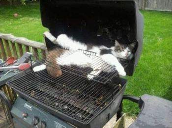 Кошки спят там, где сон застанет
