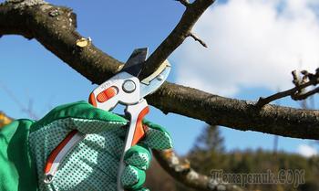 Как правильно обрезать яблоню и грушу весной