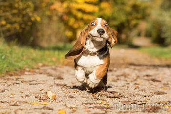 22 фотографии победителей конкурса «Лучший фотограф собак 2017 года»