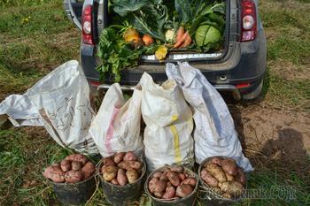 Как спасти урожай от погодных катаклизмов: 4 стратегии для любой погоды