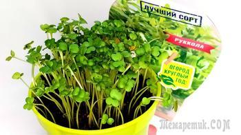 Микрозелень из Фикс прайса Наборы для выращивания «Вырасти меня»