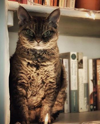Кошка выглядит так, будто готова кого-то убить