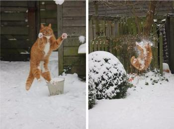 Смешные коты, пожалевшие о принятом решении