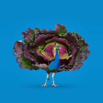 Дизайнеры совмещают несовместимое, создавая сюрреалистические портреты животных