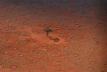 Загадка ведьминых кругов в Намибии