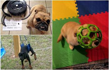 17 забавных снимков собак, которые сделали нечто, о чем пожалели