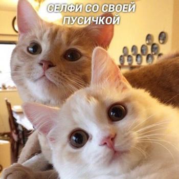 Виды селфи у котеек
