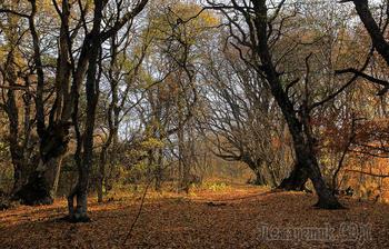 Крым. Демерджи. Осень