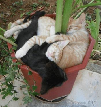 Пришла весна — расцвели коты или 14 смешных котов в цветочных горшках
