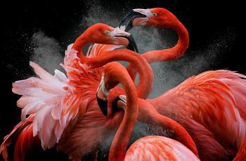 Победители конкурса «Птичий фотограф года – 2018»