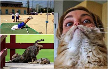 17 смешных фотографий, изюминкой которых стали случайные обстоятельства