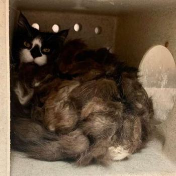 Семья обнаружила страшно лохматого кота в подвале